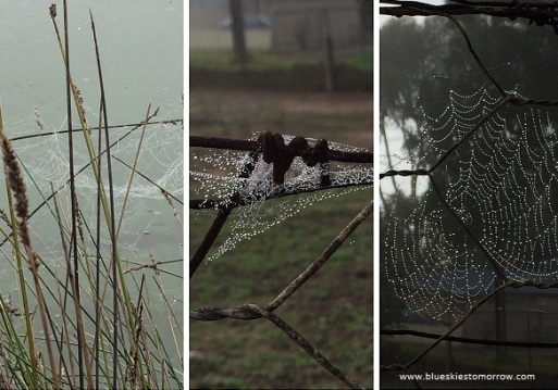 clever-webs